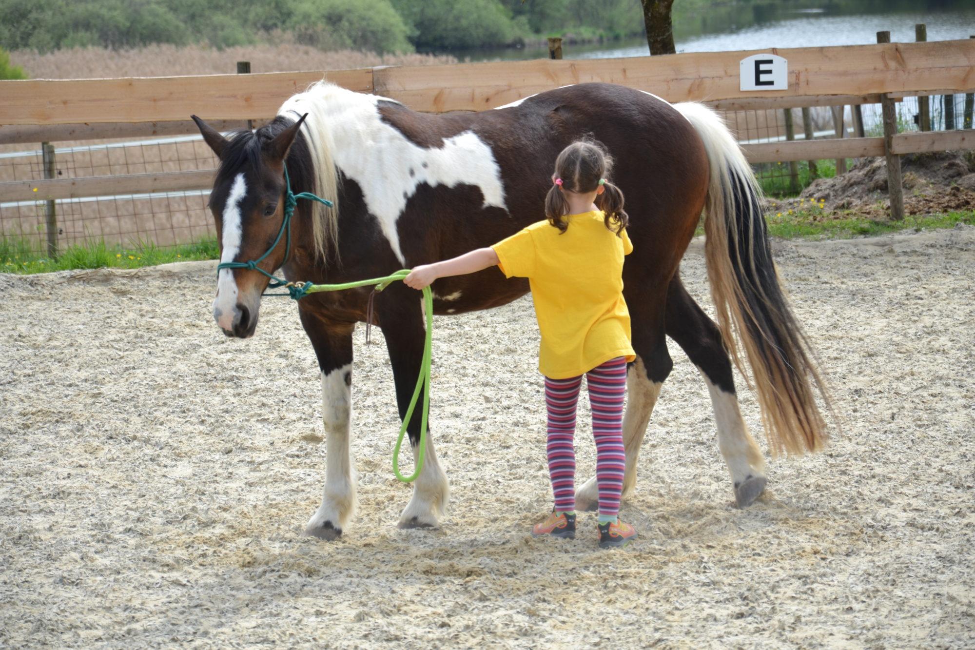 """Bodenarbeit im Kurs """"Erlebnis Pferd"""" für Kinder in Regensburg"""