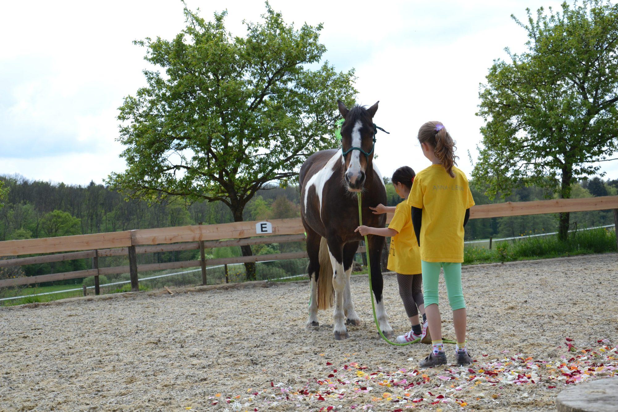 Herausforderungen und freudvolle Erlebnisse für Geschwisterkinder beim pferdegestützten Geschwister-Kinder-Projekt Regensburg