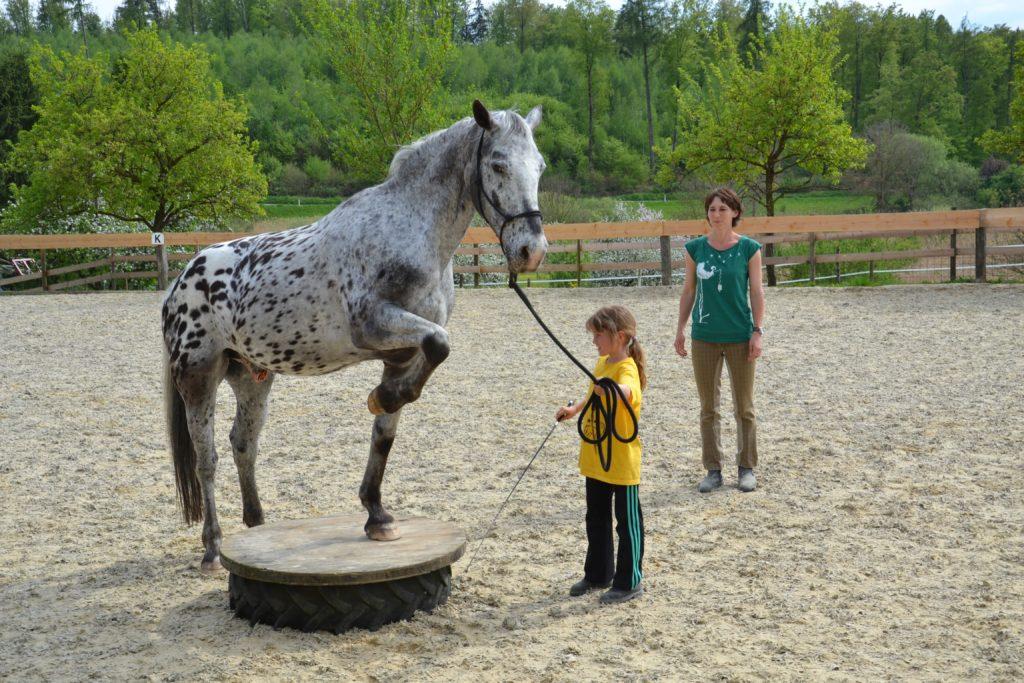 "Zirkuslektionen im Kurs ""Erlebnis Pferd"" Regensburg"