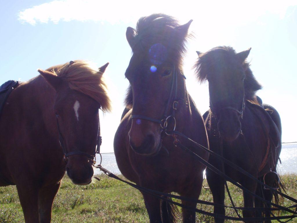 Erlebnis Pferd Regensburg