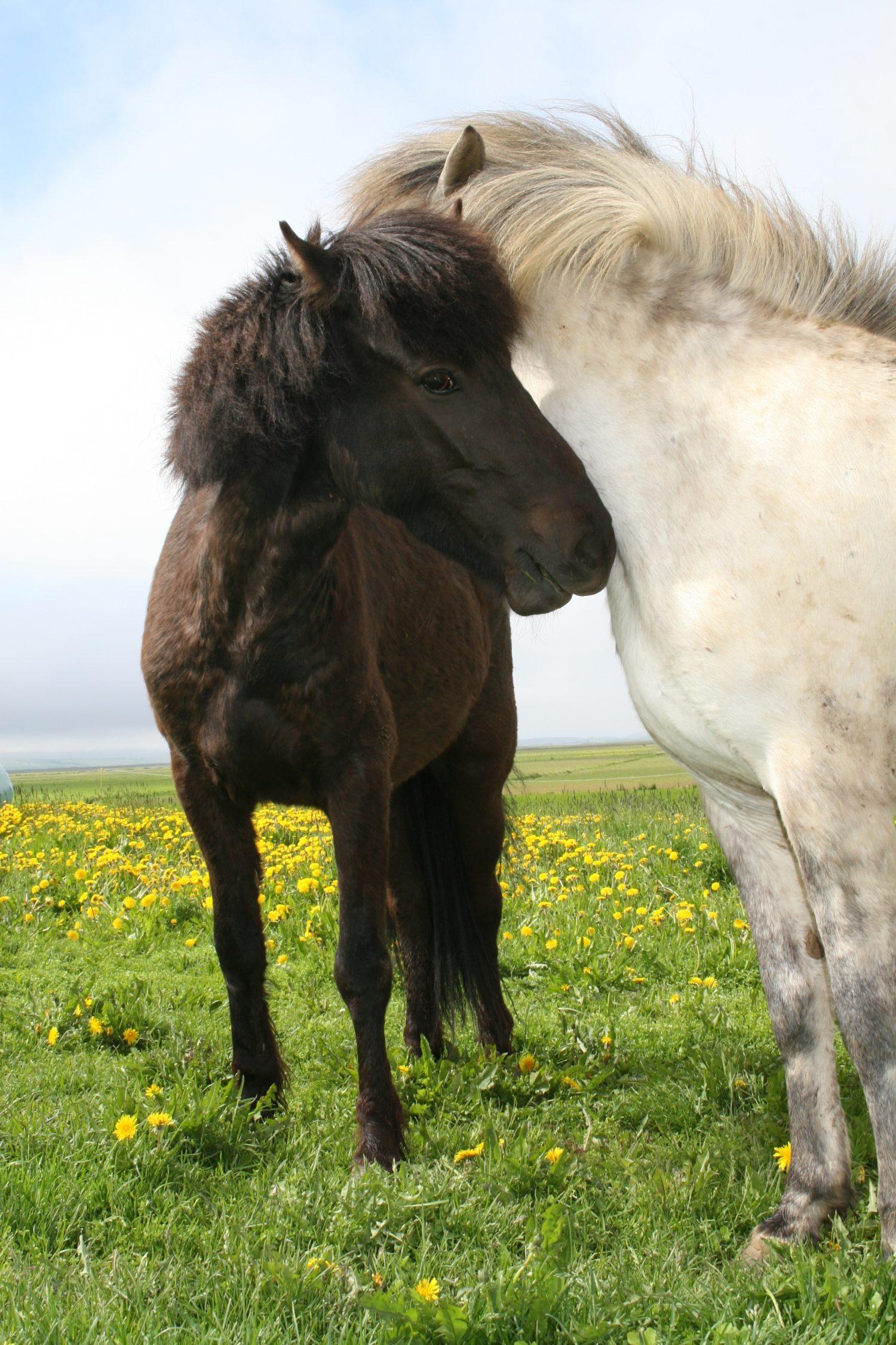Gemeinsam können wir es schaffen! Pferdegestütztes Geschwister-Kinder-Projekt Regensburg