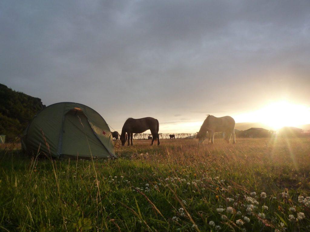 Erlebniswanderung mit Pferden Konstanz